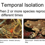 Temporal Isolation: Example & Definition