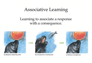 Associative Learning: Definition, Theory & Examples